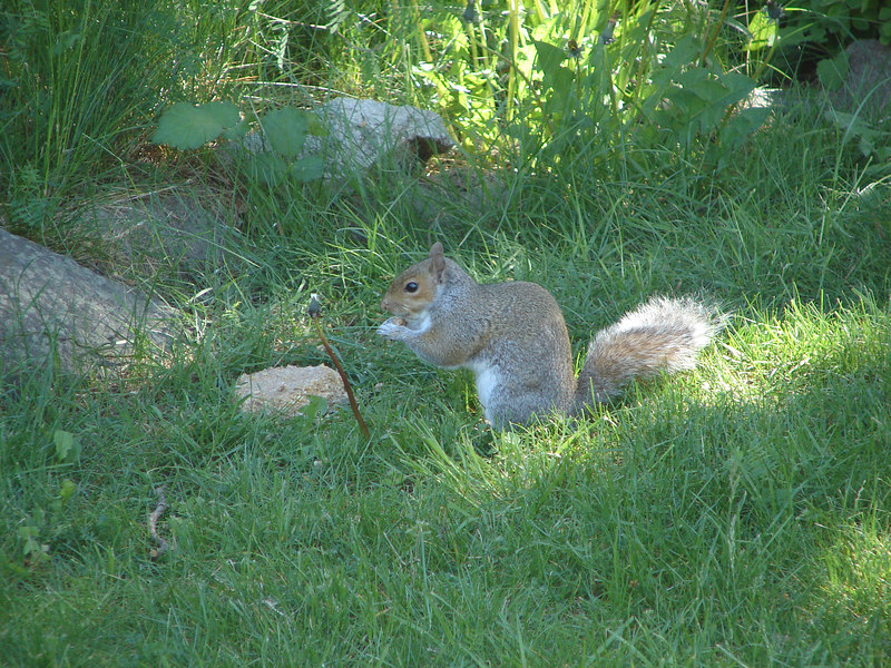 First day, this fellow opens the feeder and devours half the food.