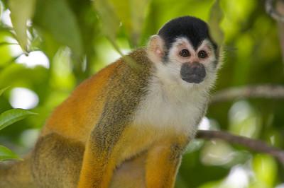 Squirrel Monkey Up Close
