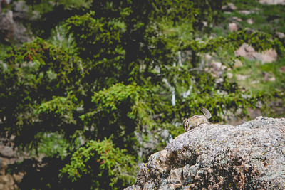 Needles Highway | South Dakota Needles Highway // South Dakota // 2015