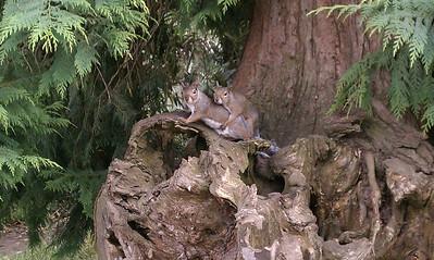 Squirrels at Stow Lake