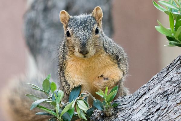 Squirrels Squirrels Squirrels