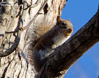 Aw, a Nut!