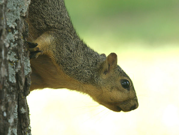 Taken with my Bigma Lens. Whatcha doin, Doc? Wait and I'll grab a Nut for a better picture!