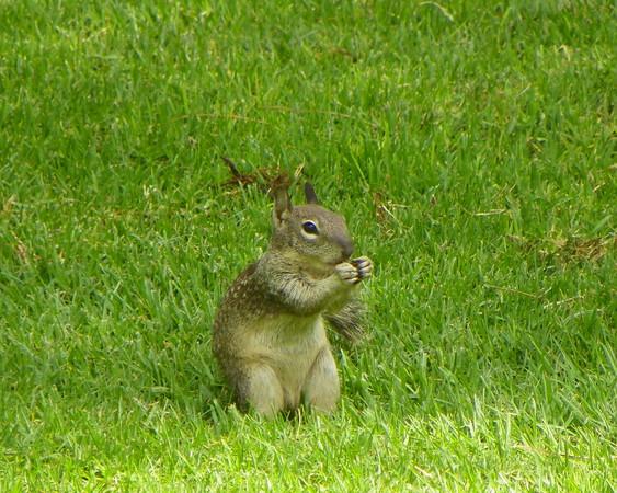 Squirrel 9