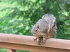 squirrel 016