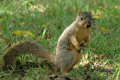 Taken with my Bigma Lens. Wait a minute, I ain't found a Nut yet! I'm still lookin. Don't bother me!