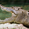 2013_03_Alligator_Farm-137-Edit