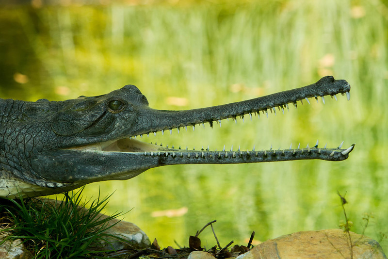 2013_03_Alligator_Farm-194-Edit