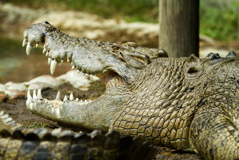 2013_03_Alligator_Farm-169-Edit