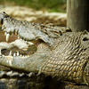 2013_03_Alligator_Farm-169-Edit