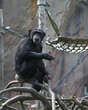 St. Louis Zoo April 24th, 2012