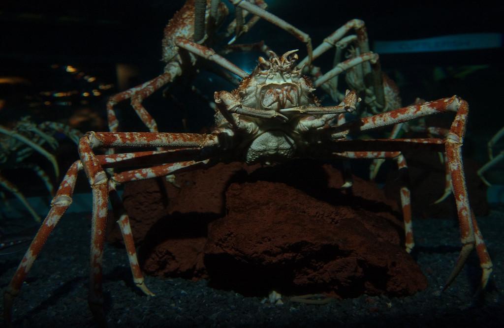 Ripleys Aquarium_06-23-09__B7A1993