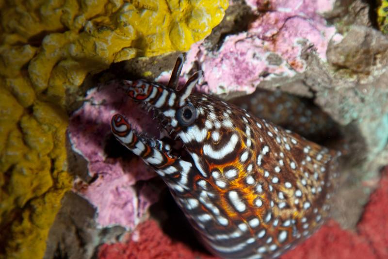 Ripleys Aquarium_06-23-09__B7A2007