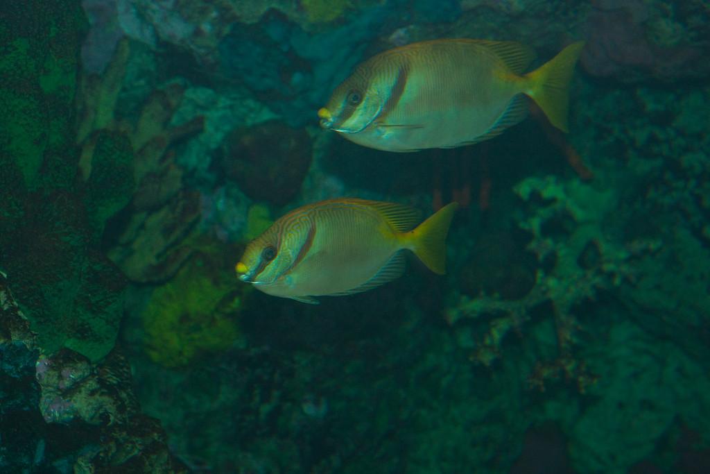 Ripleys Aquarium_06-23-09__B7A1959