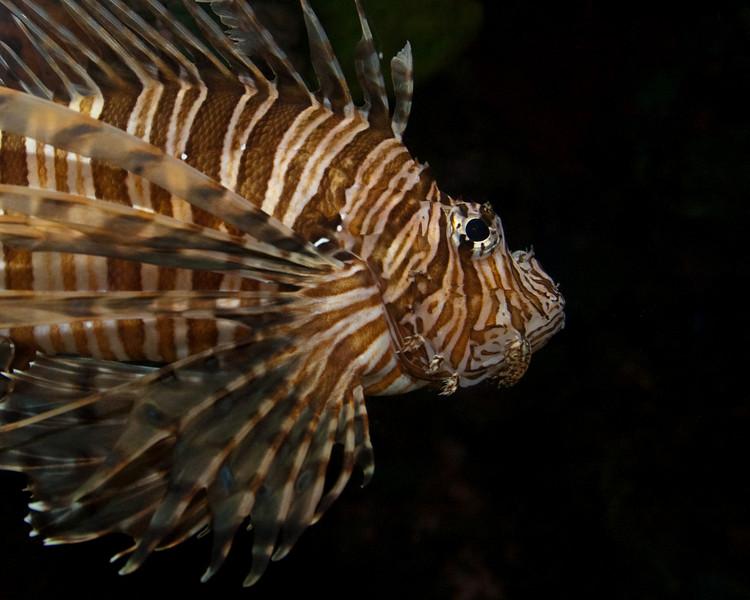 Ripleys Aquarium_06-23-09__B7A1983