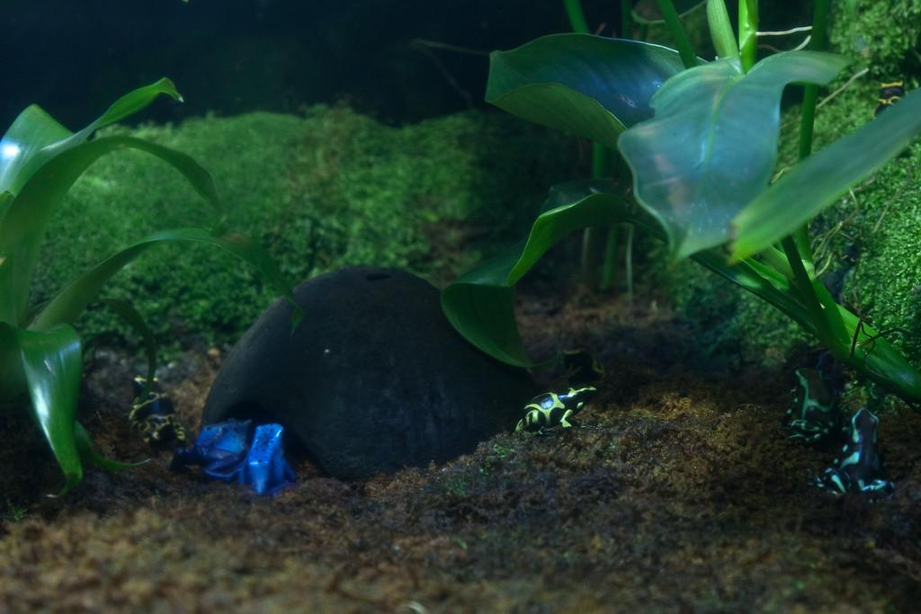 Ripleys Aquarium_06-23-09__B7A1923
