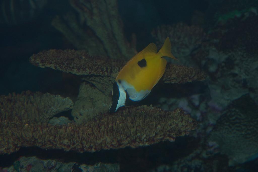 Ripleys Aquarium_06-23-09__B7A1960