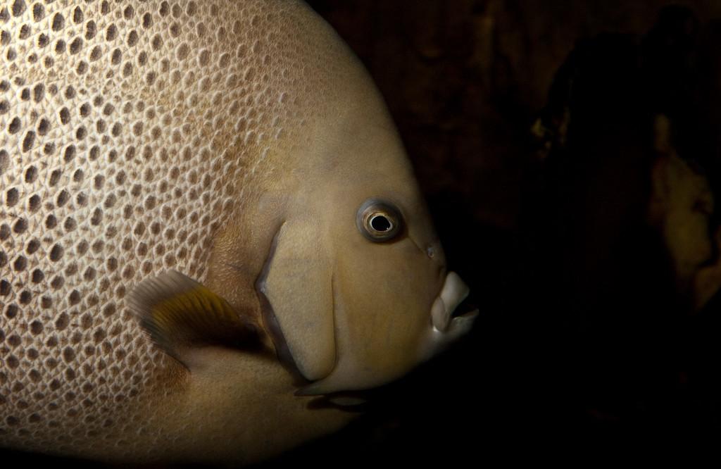 Ripleys Aquarium_06-23-09__B7A2034