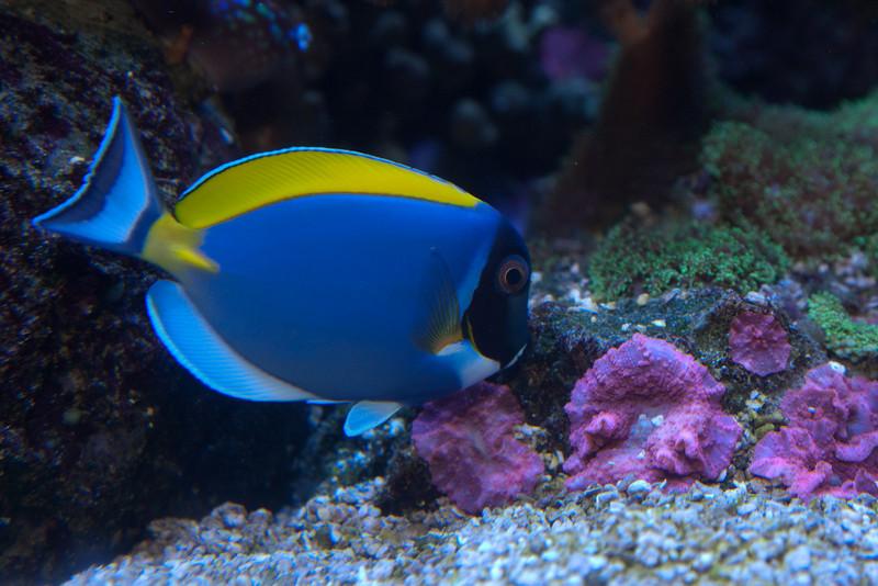 Ripleys Aquarium_06-23-09__B7A1979