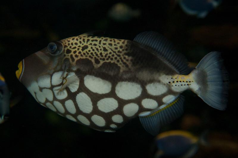 Ripleys Aquarium_06-23-09__B7A2022