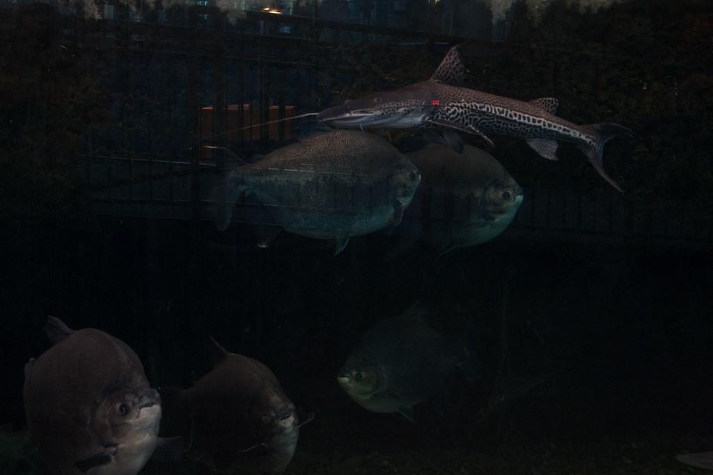 Ripleys Aquarium_06-23-09__B7A1940