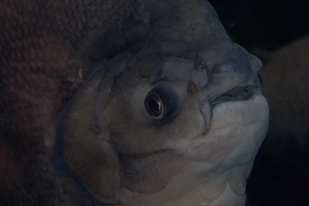 Ripleys Aquarium_06-23-09__B7A1935