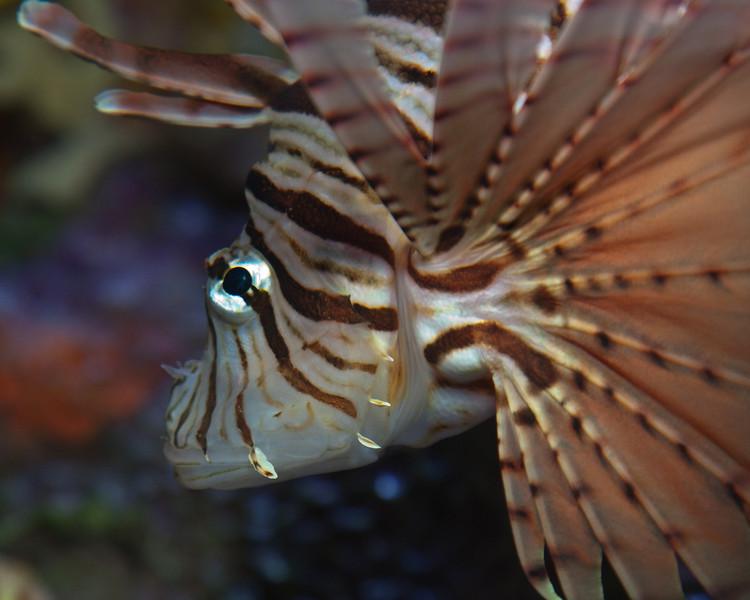 Ripleys Aquarium_06-23-09__B7A2003