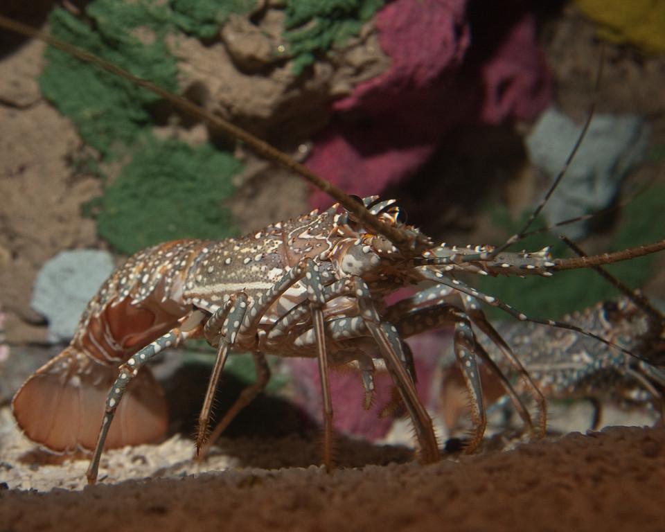 Ripleys Aquarium_06-23-09__B7A2010