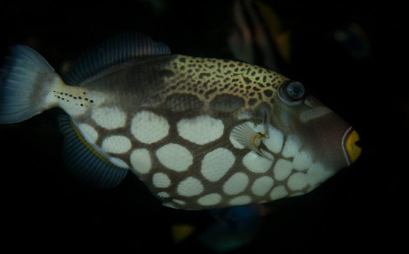 Ripleys Aquarium_06-23-09__B7A2025