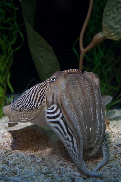 Ripleys Aquarium_06-23-09__B7A1995