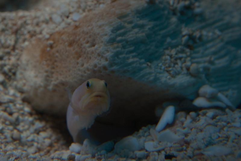 Ripleys Aquarium_06-23-09__B7A1930