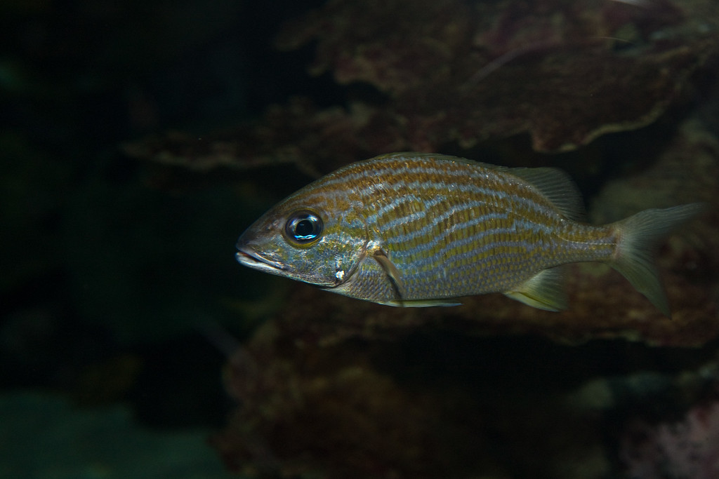 Ripleys Aquarium_06-23-09__B7A1963