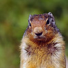 Columbian ground squirrel Rocky Mountain landscape mountains scenic landscape - Photograph by professional nature stock photographer Christina Craft