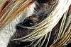 ARTblueeye6474fweb