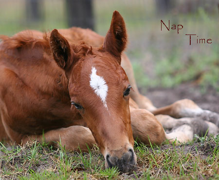 Foal sleeping in field
