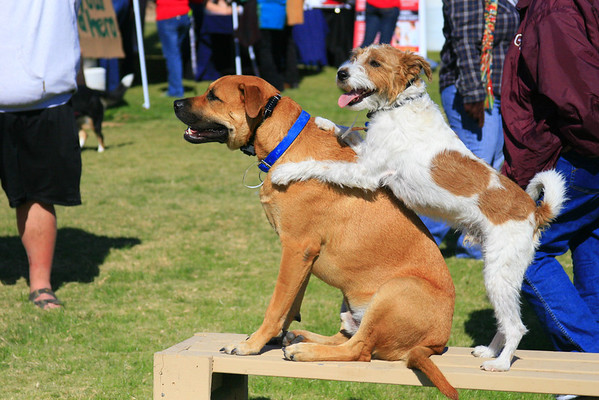 Cyrus, left, and Jack competed at this year's Strut Your Mutt when they weren't warming the bench.