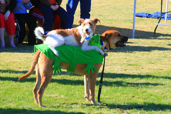 Cyrus gives Jack a ride during the Silly Pet Tricks with Props contest at Strutt Your Mutt.