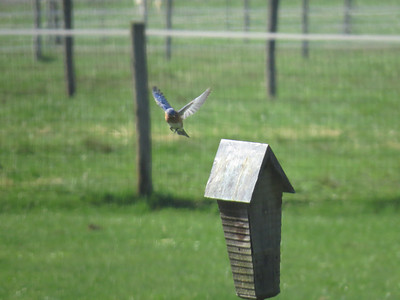 Bluebird flight 1