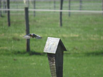 Bluebird flight 2