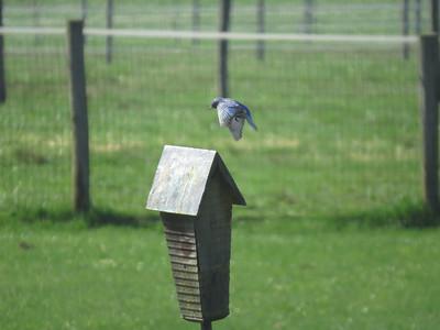 Bluebird flight 3