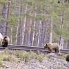 Fyra björnar 2012-05-13 20:41:17