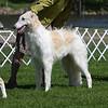 Borscana Contraband 7/24/08<br /> 1st 6-9 dogs