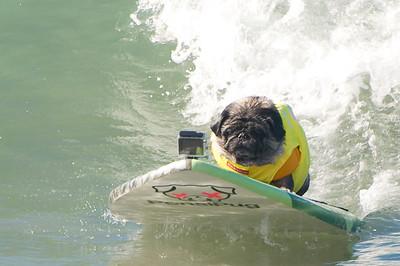 Surf City Dog Surf 2015