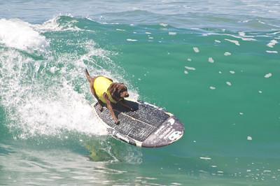 Surf City Dog Surf 2016