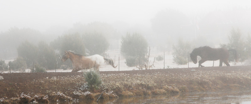 Dakota and Tomas have fun in the snow. Saved from slaughter with 25 other horses on the border of Mexico.