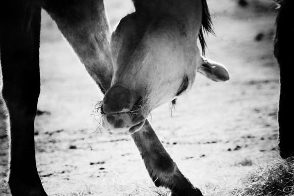 Kiowa Rachael Waller Photography