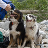 Saddle up!<br /> <br /> Mud and Phoebe are being pack trained, perhaps to walk the Appalachian Trail one day soon