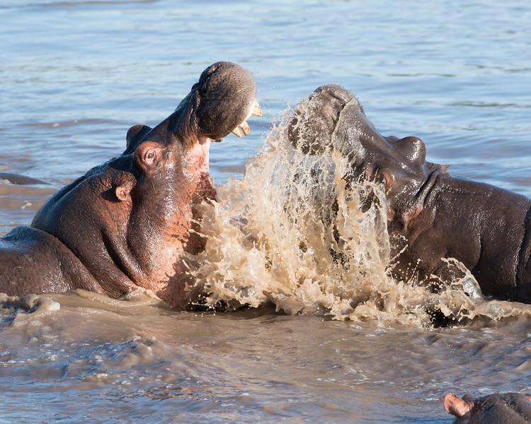 Hippo Challenge