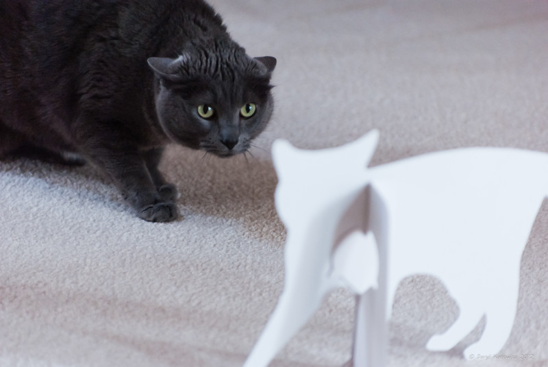 """I call this one """"Paper Tiger"""".  My daughter had this cardboard cat cut-out and put it on the floor one day and suddenly our cat became very territorial.  She apparently has some self-esteem issues."""