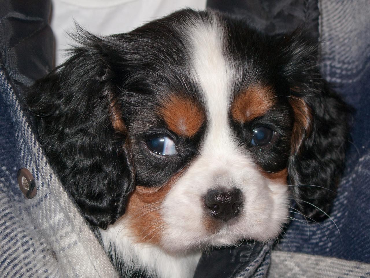Tammi Puppy-0535